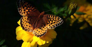Trípticos De La Biodiversidad