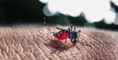 Trípticos Del Dengue